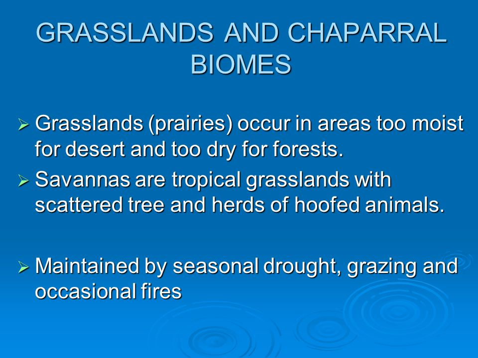 GRASSLANDS AND CHAPARRAL BIOMES  Grasslands (prairies) occur in areas too moist for desert and too dry for forests.  Savannas are tropical grassland