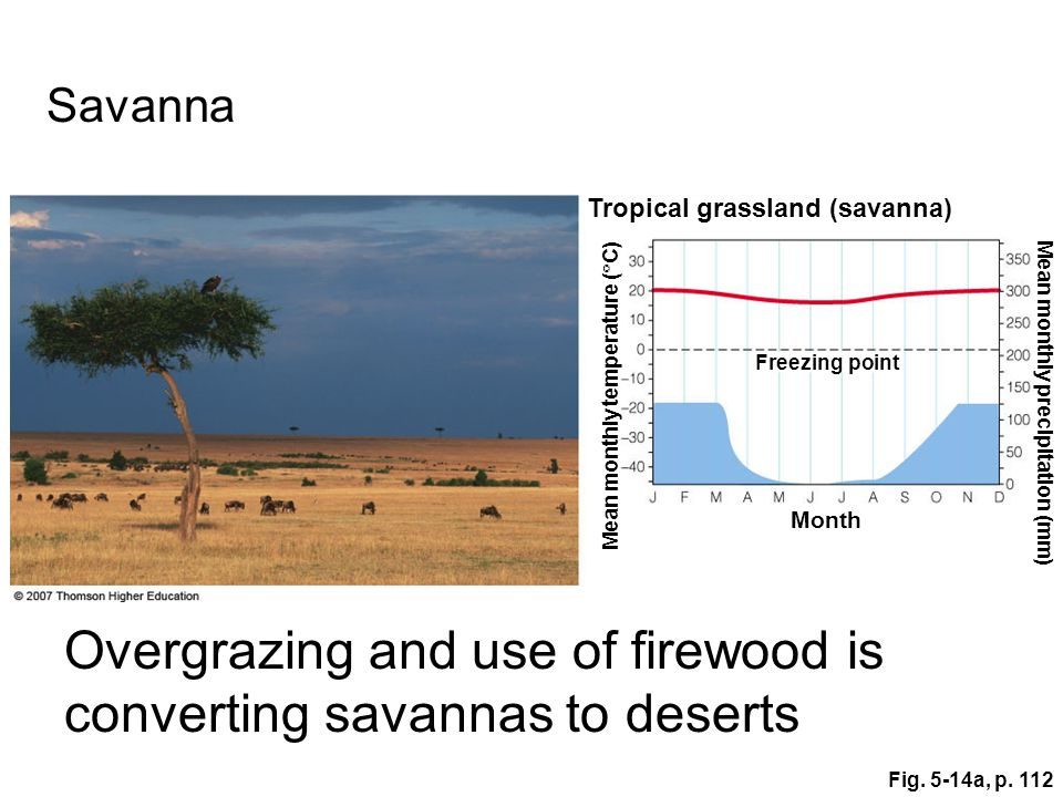 Fig. 5-14a, p. 112 Tropical grassland (savanna) Mean monthly temperature (  C) Mean monthly precipitation (mm) Month Freezing point Savanna Overgrazi