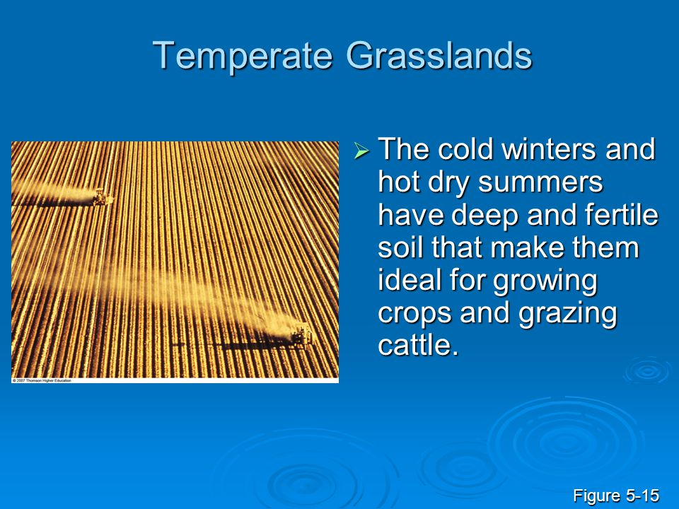 Temperate Grasslands  The cold winters and hot dry summers have deep and fertile soil that make them ideal for growing crops and grazing cattle. Figu