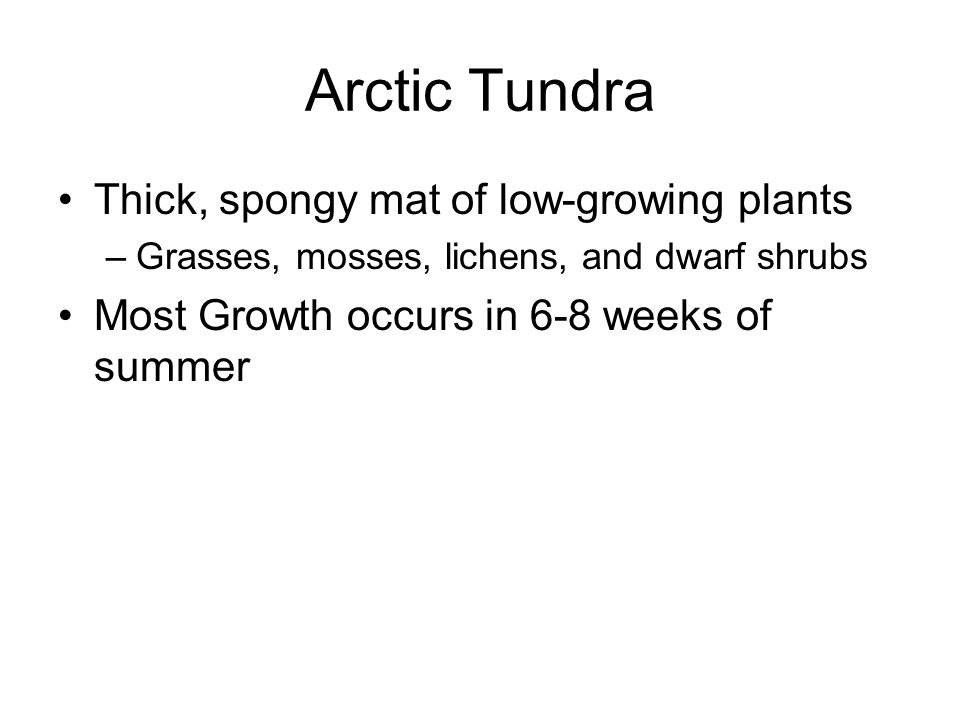 Arctic Tundra Thick, spongy mat of low-growing plants –Grasses, mosses, lichens, and dwarf shrubs Most Growth occurs in 6-8 weeks of summer