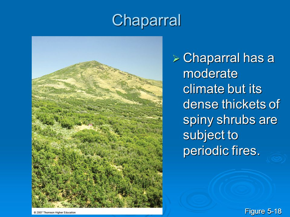 Chaparral  Chaparral has a moderate climate but its dense thickets of spiny shrubs are subject to periodic fires. Figure 5-18