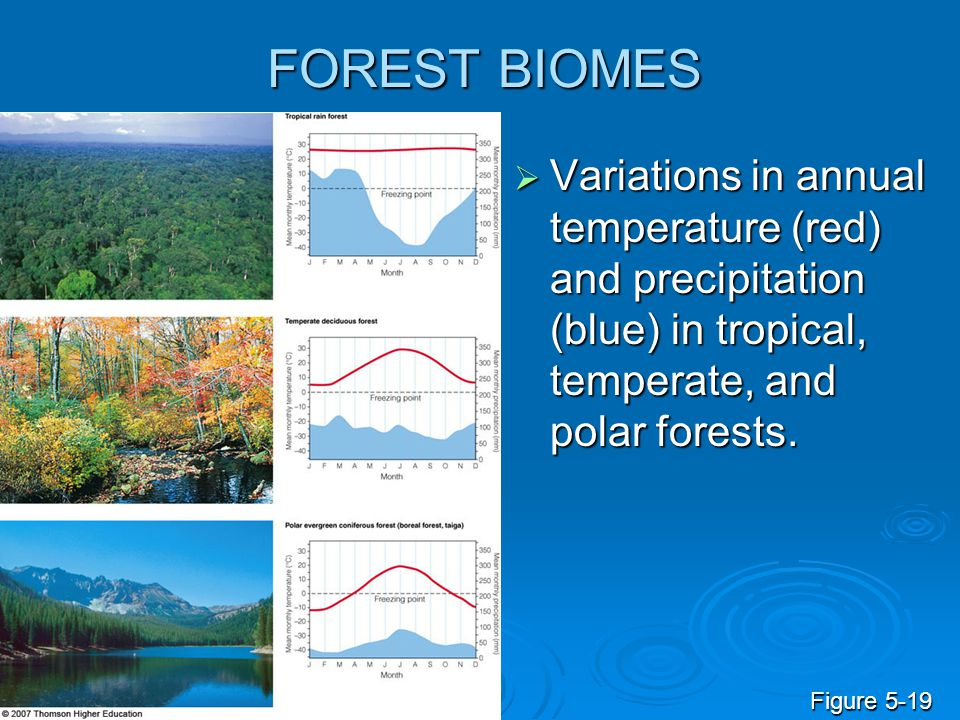 FOREST BIOMES  Variations in annual temperature (red) and precipitation (blue) in tropical, temperate, and polar forests. Figure 5-19