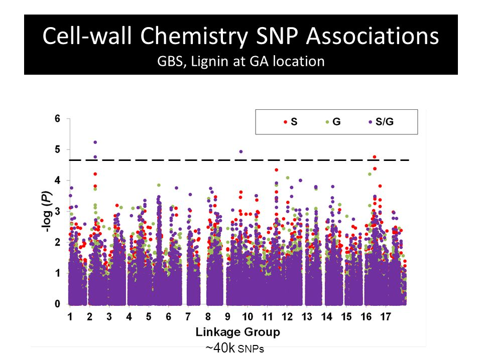 Cell-wall Chemistry SNP Associations GBS, Lignin at GA location ~40k SNPs