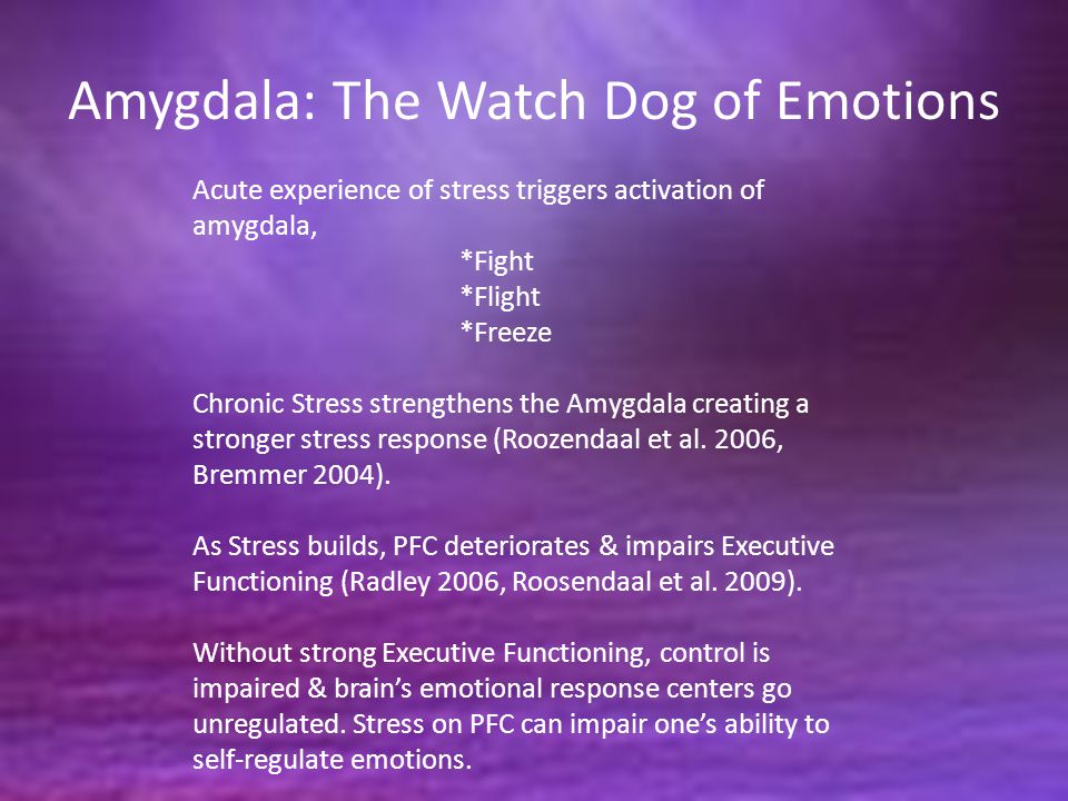 Amygdala: The Watch Dog of Emotions Acute experience of stress triggers activation of amygdala, *Fight *Flight *Freeze Chronic Stress strengthens the