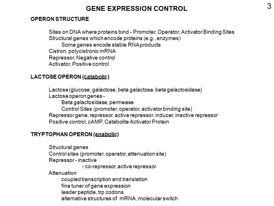 4 BACTERIAL GENES ARE SUBJECT TO: NEGATIVE CONTROL REPRESSOR PROTEIN - ACTIVE/INACTIVE POSITIVE CONTROL ACTIVATOR PROTEIN - ACTIVE/INACTIVE BOTH POSITIVE AND NEGATIVE CONTROL FINAL RESULT DEPENDS ON INTERACTION OF BOTH MECHANISMS NEITHER POSITIVE NOR NEGATIVE ALWAYS TRANSCRIBED USUALLY AT LOW LEVEL -CONSTITUTIVE-