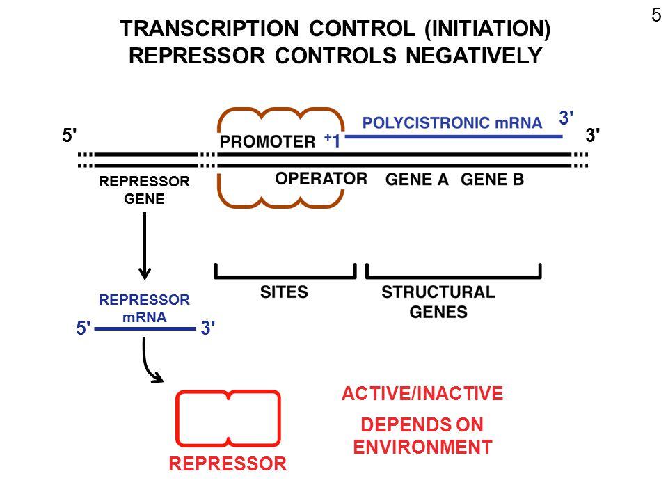 6 ACTIVE REPRESSOR - BINDS OPERATOR INHIBITS TRANSCRIPTION [INITIATION] LITTLE OR NO TRANSCRIPTION INACTIVE REPRESSOR - CANNOT BIND OPERATOR RNA POLYMERASE TRANSCRIBES RNA POLYMERASE OPERON; OPERATOR CISTRON; POLYCISTRONIC mRNA