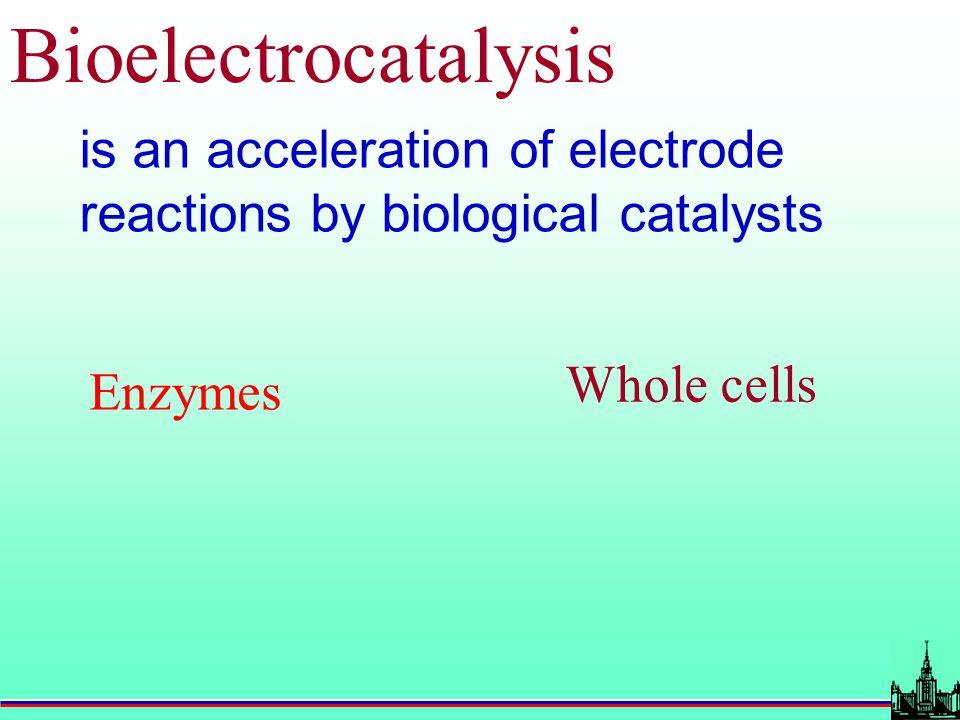 Applications of bioelectrocatalysis Fuel electrodes (biofuel cells) Biosensors Electrosysthesis