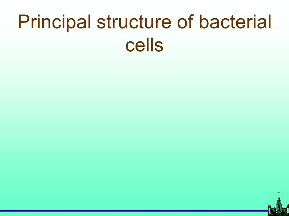 Principal structure of bacterial cells
