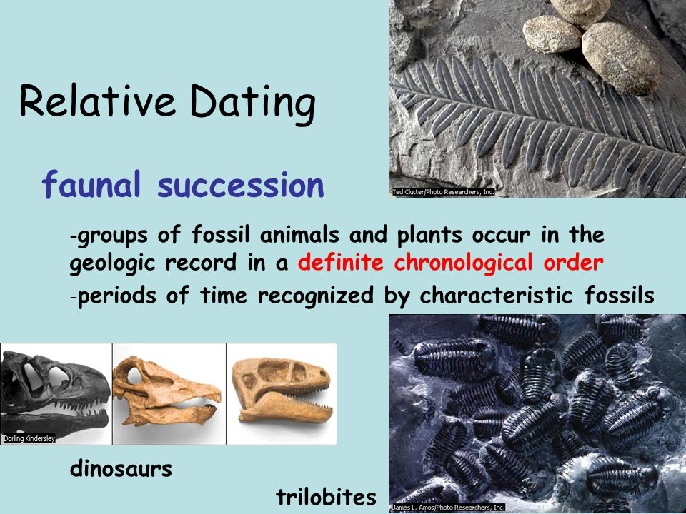 Relative Dating faunal succession trilobites dinosaurs – groups of fossil animals and plants occur in the geologic record in a definite chronological