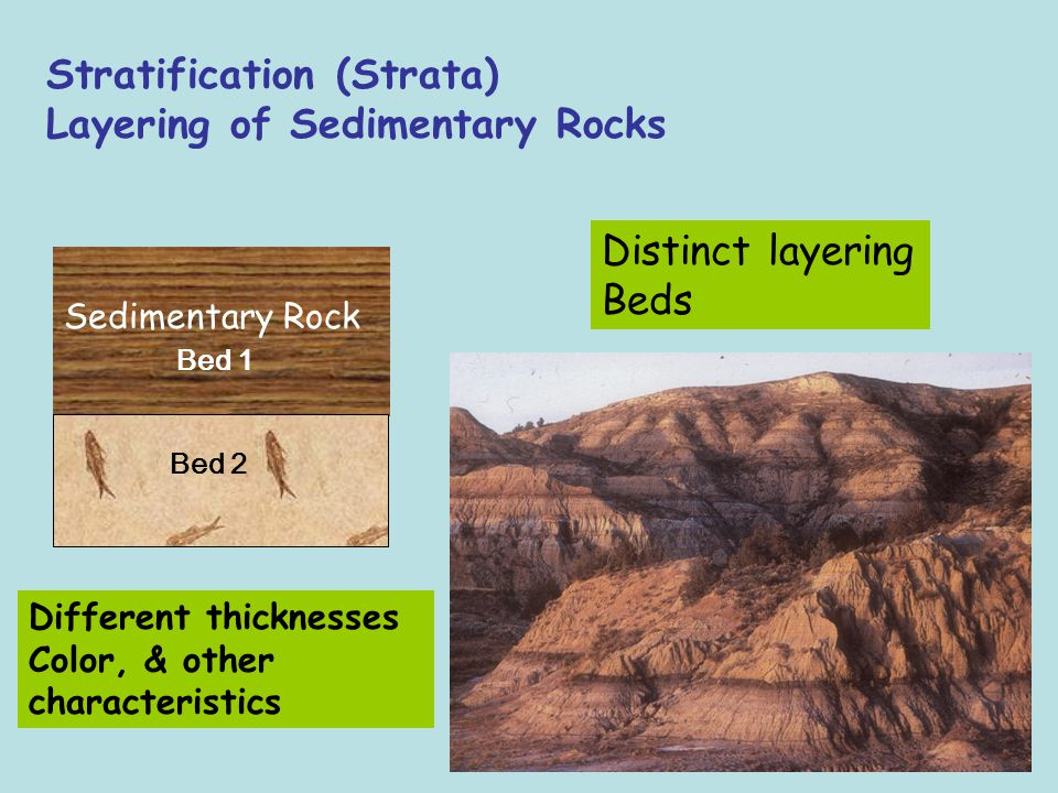Stratification (Strata) Layering of Sedimentary Rocks Sedimentary Rock Distinct layering Beds Bed 1 Bed 2 Different thicknesses Color, & other charact