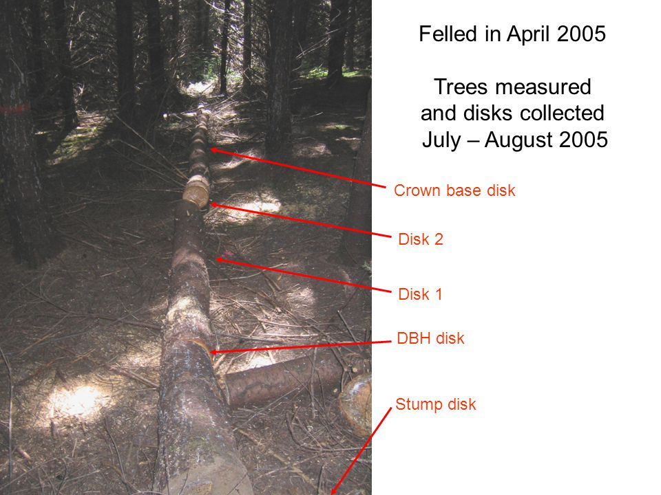 Felled in April 2005 Trees measured and disks collected July – August 2005 Stump disk DBH disk Disk 1 Crown base disk Disk 2
