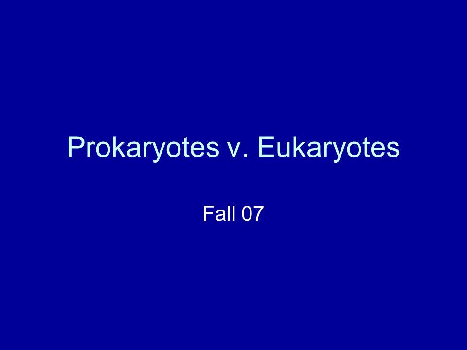 Prokaryotes v. Eukaryotes Fall 07