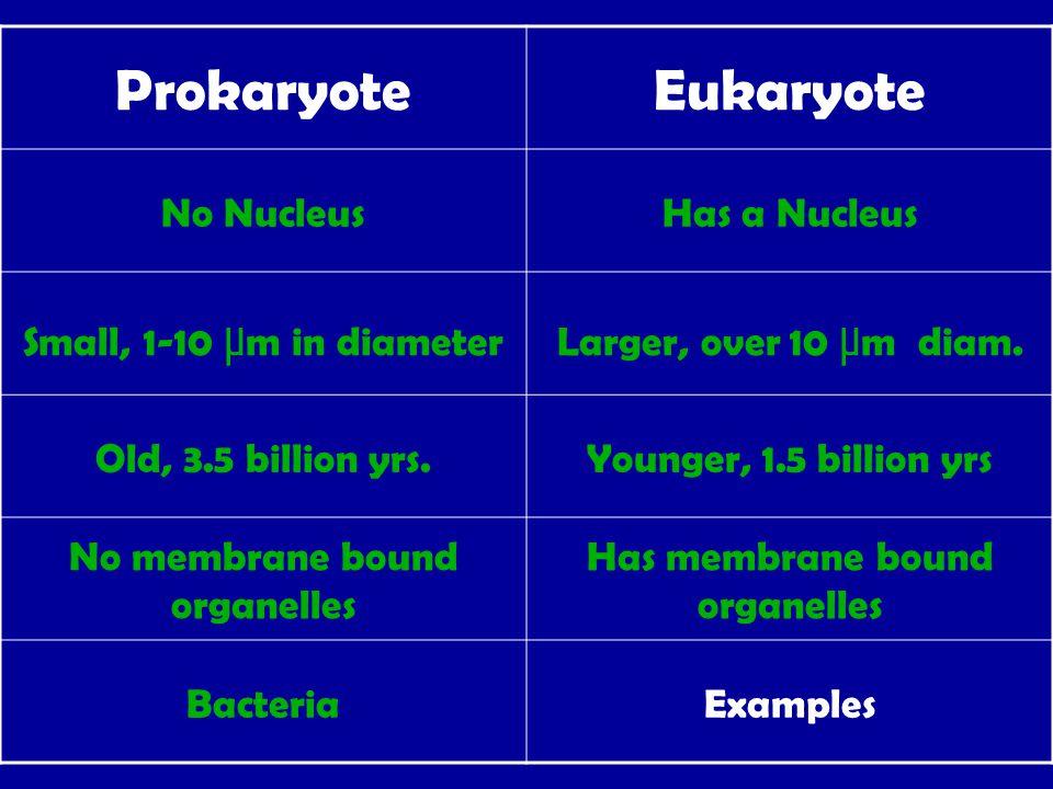ProkaryoteEukaryote No NucleusHas a Nucleus Small, 1-10 μ m in diameterLarger, over 10 μ m diam.