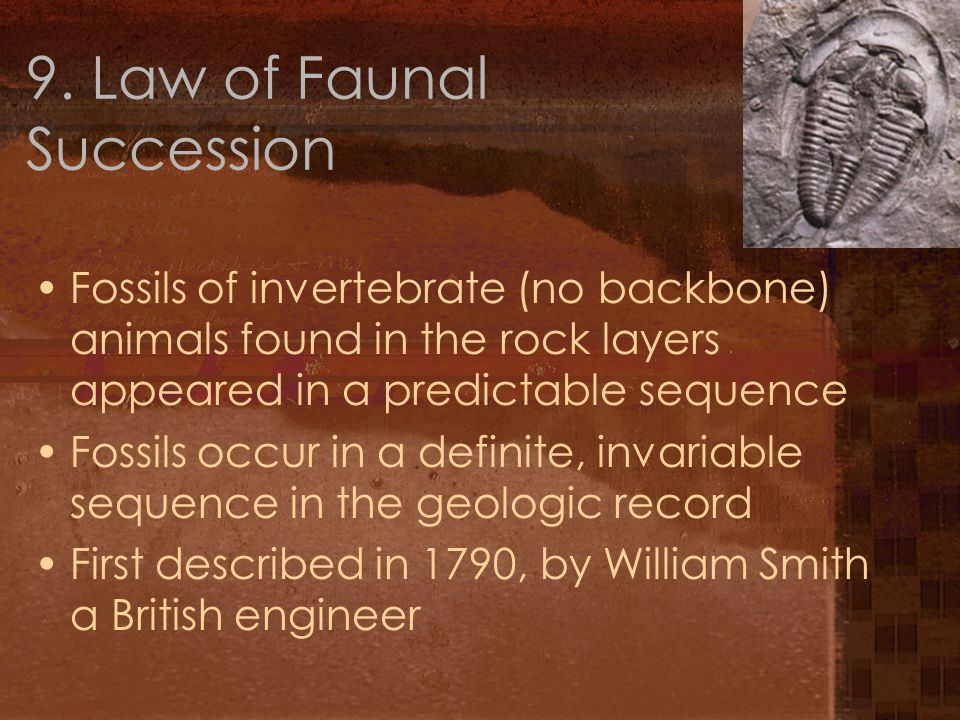9. Law of Faunal Succession Fossils of invertebrate (no backbone) animals found in the rock layers appeared in a predictable sequence Fossils occur in