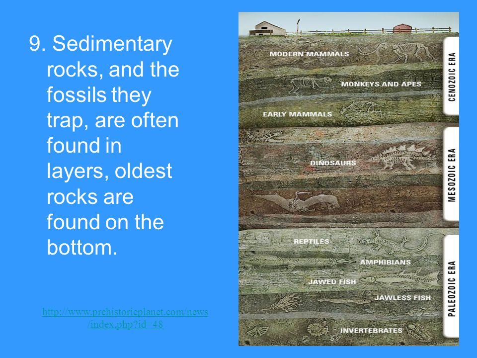 9. Sedimentary rocks, and the fossils they trap, are often found in layers, oldest rocks are found on the bottom. http://www.prehistoricplanet.com/new