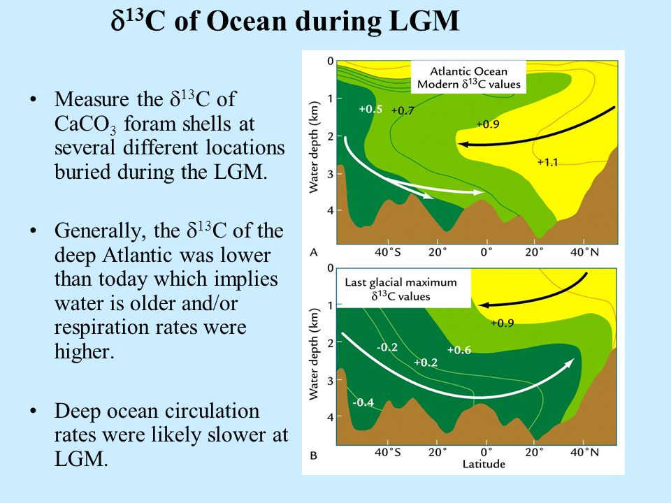 19  13 C of Ocean during LGM Measure the  13 C of CaCO 3 foram shells at several different locations buried during the LGM.