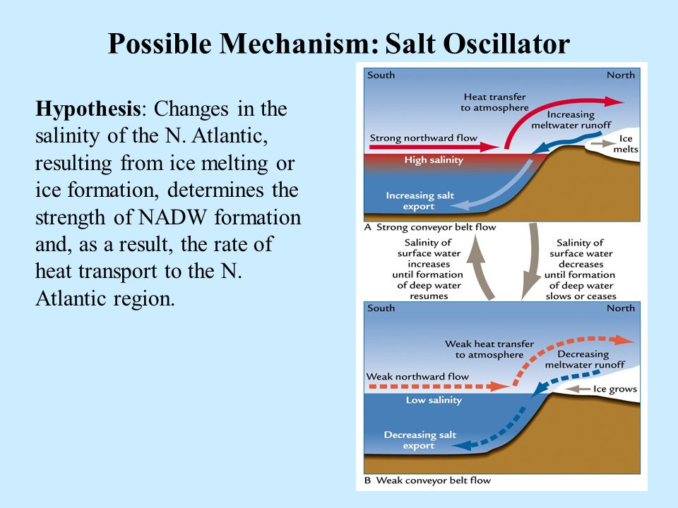 39 Possible Mechanism: Salt Oscillator Hypothesis: Changes in the salinity of the N. Atlantic, resulting from ice melting or ice formation, determines
