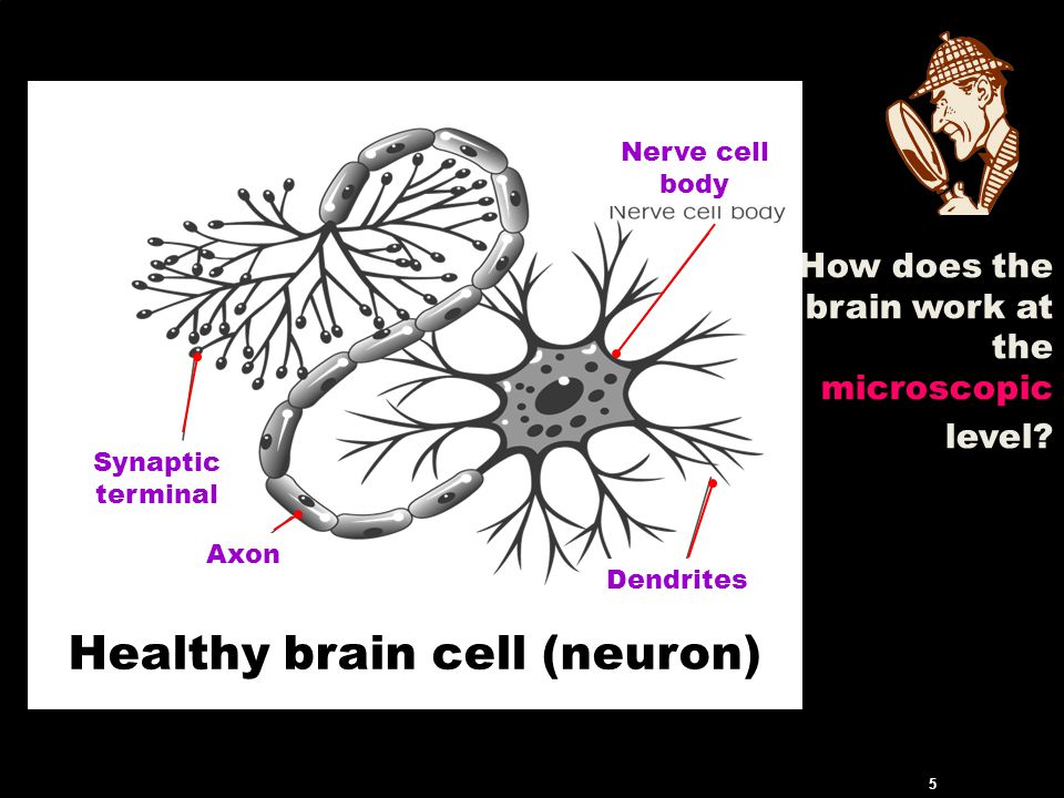 How does the brain work at the microscopic level.