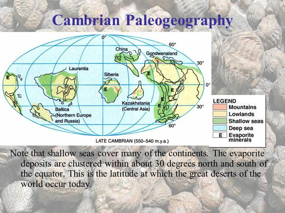 Cambrian Paleogeography Note that shallow seas cover many of the continents.
