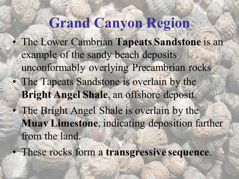 Grand Canyon Region The Lower Cambrian Tapeats Sandstone is an example of the sandy beach deposits unconformably overlying Precambrian rocks The Tapeats Sandstone is overlain by the Bright Angel Shale, an offshore deposit.