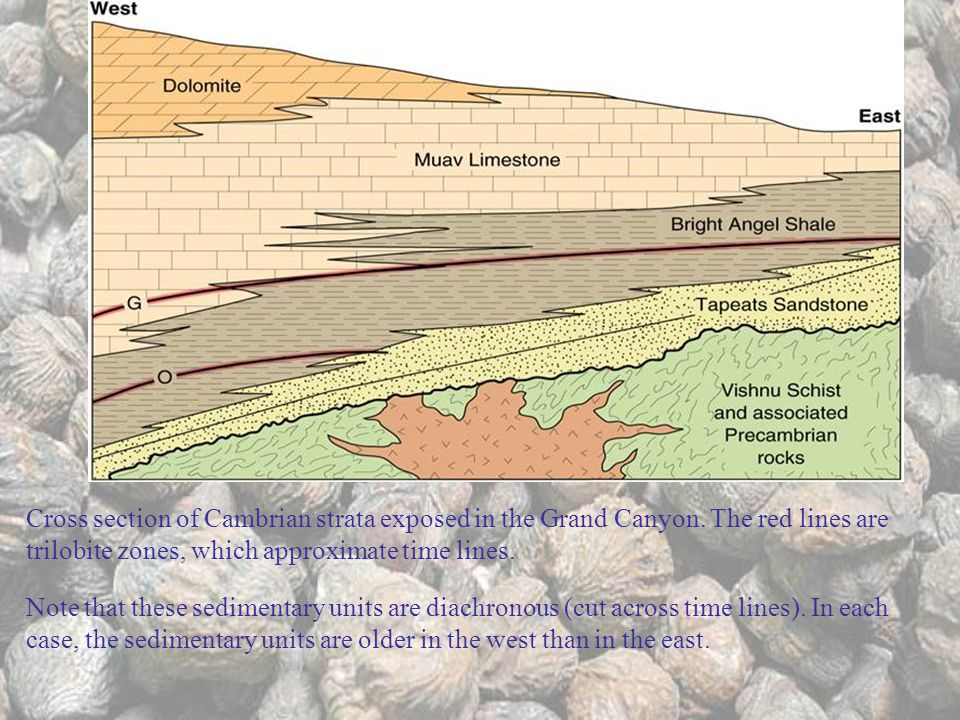 Cross section of Cambrian strata exposed in the Grand Canyon.
