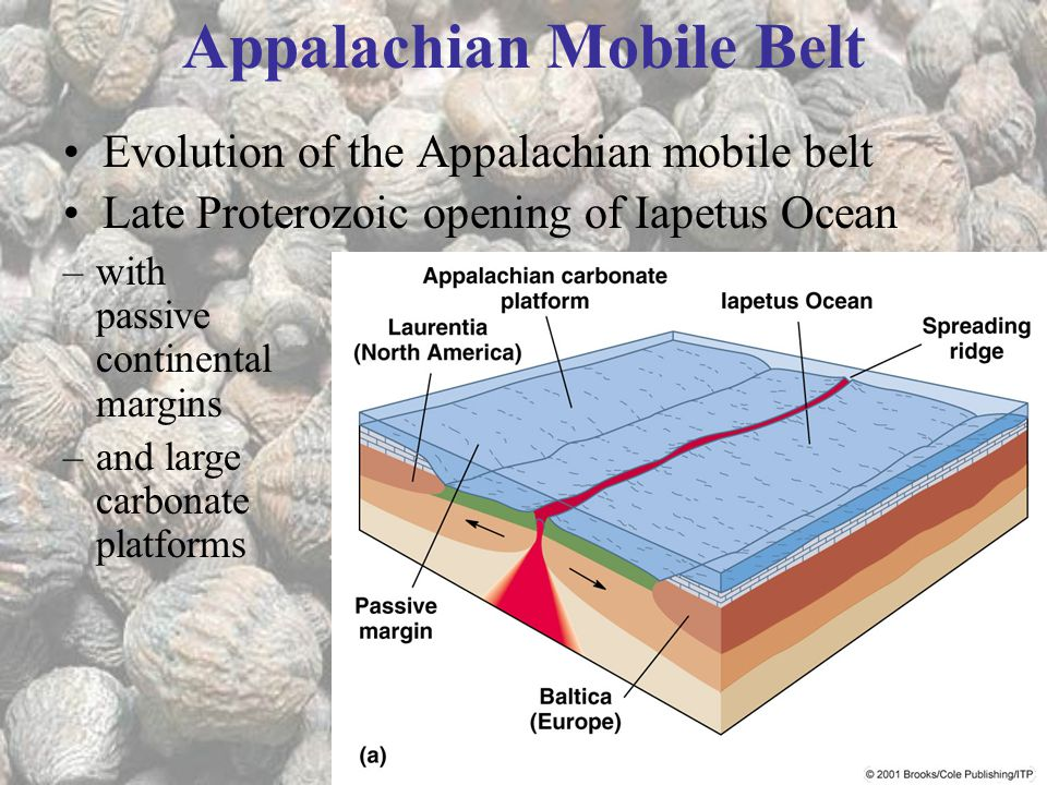 Evolution of the Appalachian mobile belt Late Proterozoic opening of Iapetus Ocean Appalachian Mobile Belt –with passive continental margins –and large carbonate platforms