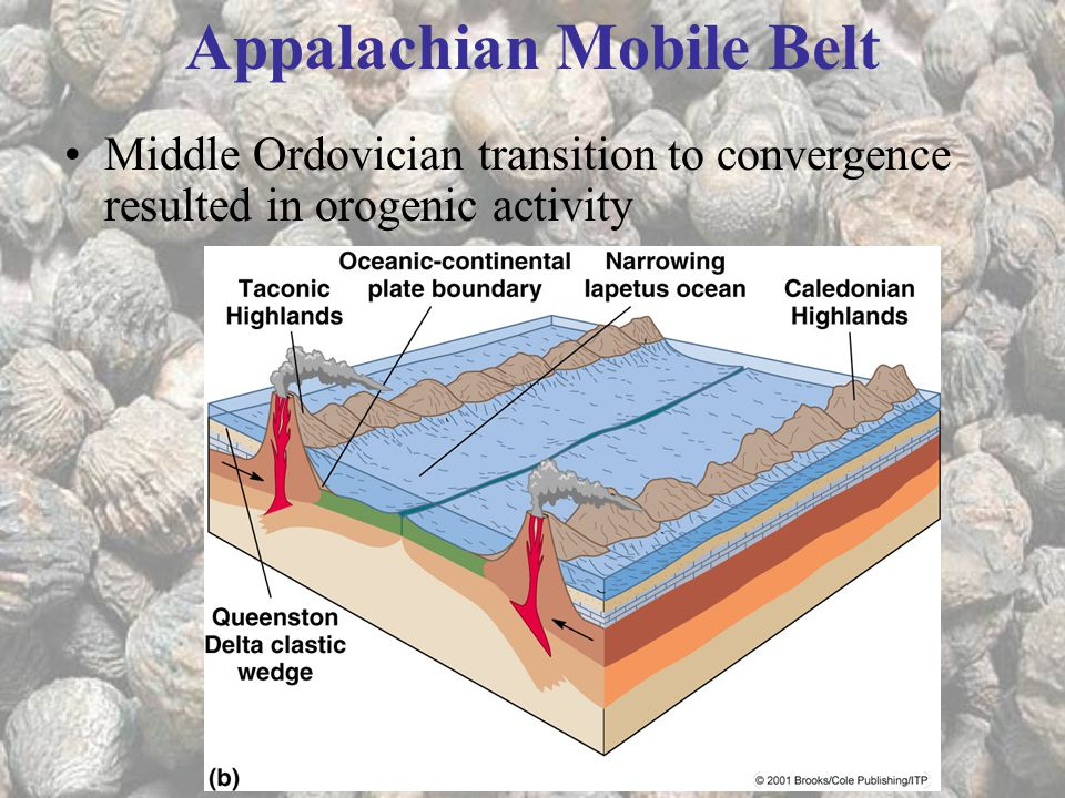 Middle Ordovician transition to convergence resulted in orogenic activity Appalachian Mobile Belt