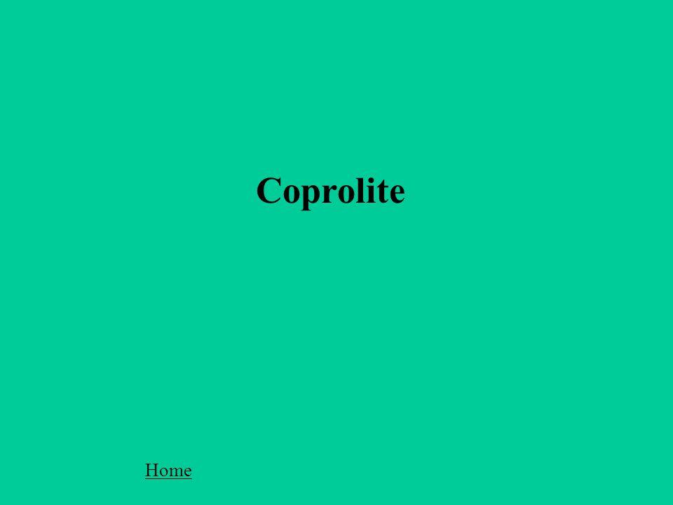 Coprolite Home