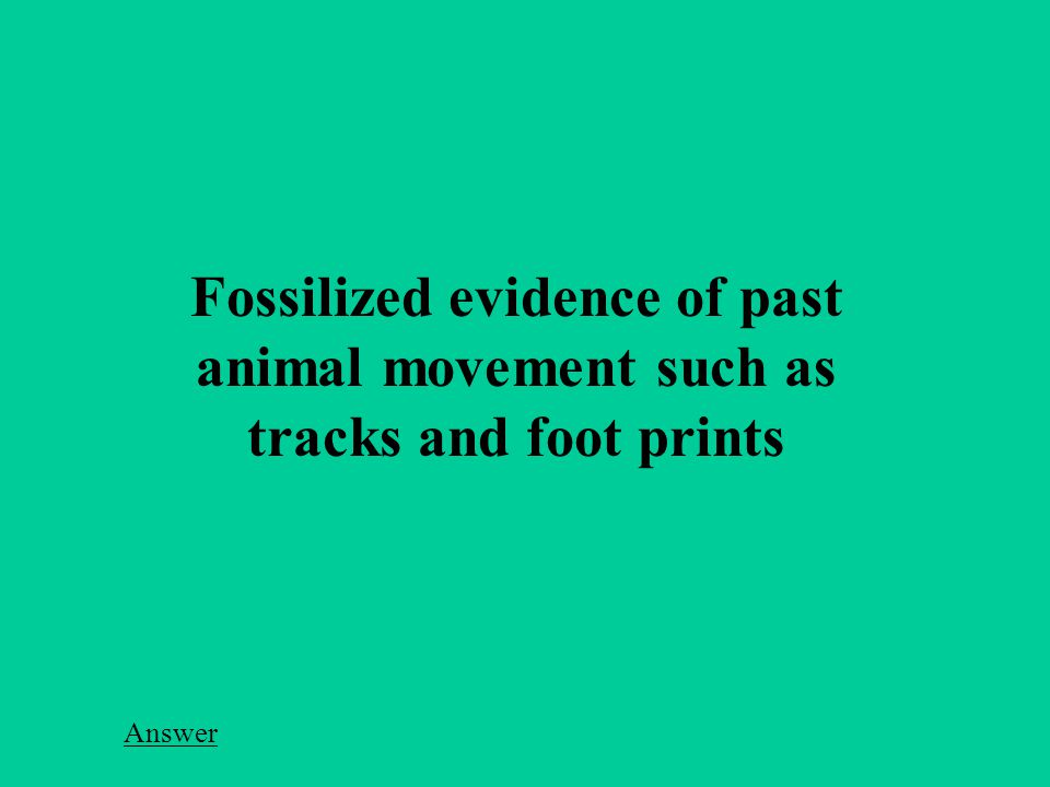 Fossilized evidence of past animal movement such as tracks and foot prints Answer