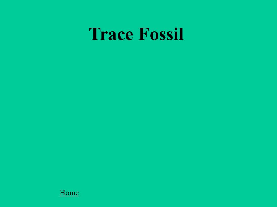Trace Fossil Home
