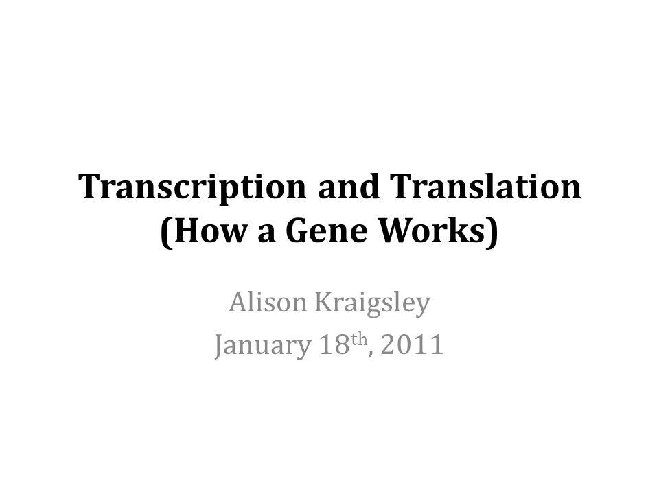Transcription and Translation (How a Gene Works) Alison Kraigsley January 18 th, 2011