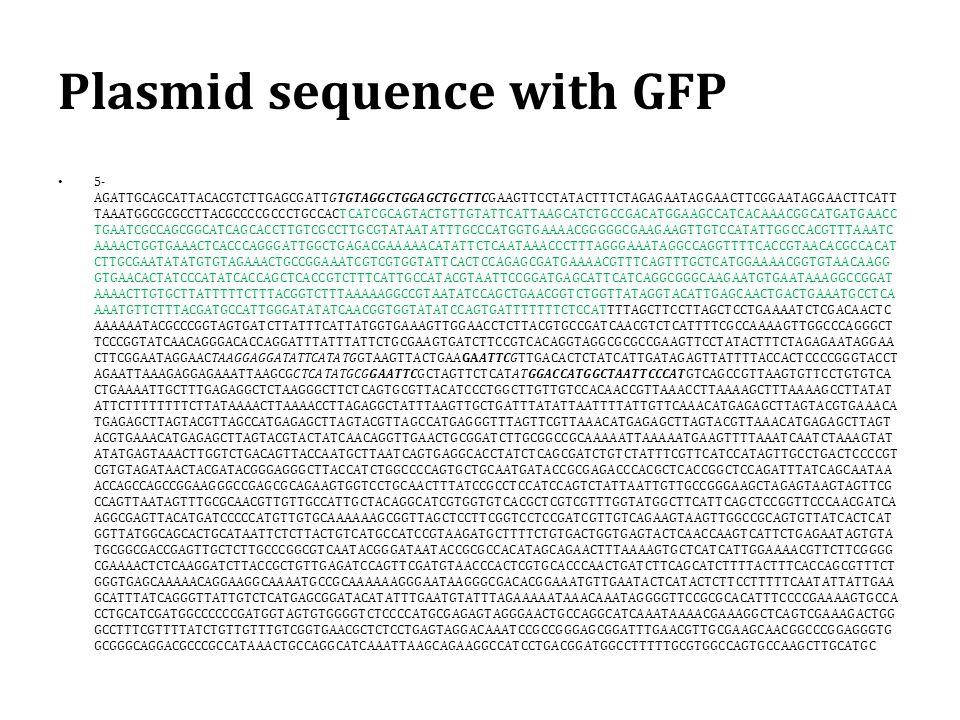 Plasmid sequence with GFP 5- AGATTGCAGCATTACACGTCTTGAGCGATTGTGTAGGCTGGAGCTGCTTCGAAGTTCCTATACTTTCTAGAGAATAGGAACTTCGGAATAGGAACTTCATT TAAATGGCGCGCCTTACGCCCCGCCCTGCCACTCATCGCAGTACTGTTGTATTCATTAAGCATCTGCCGACATGGAAGCCATCACAAACGGCATGATGAACC TGAATCGCCAGCGGCATCAGCACCTTGTCGCCTTGCGTATAATATTTGCCCATGGTGAAAACGGGGGCGAAGAAGTTGTCCATATTGGCCACGTTTAAATC AAAACTGGTGAAACTCACCCAGGGATTGGCTGAGACGAAAAACATATTCTCAATAAACCCTTTAGGGAAATAGGCCAGGTTTTCACCGTAACACGCCACAT CTTGCGAATATATGTGTAGAAACTGCCGGAAATCGTCGTGGTATTCACTCCAGAGCGATGAAAACGTTTCAGTTTGCTCATGGAAAACGGTGTAACAAGG GTGAACACTATCCCATATCACCAGCTCACCGTCTTTCATTGCCATACGTAATTCCGGATGAGCATTCATCAGGCGGGCAAGAATGTGAATAAAGGCCGGAT AAAACTTGTGCTTATTTTTCTTTACGGTCTTTAAAAAGGCCGTAATATCCAGCTGAACGGTCTGGTTATAGGTACATTGAGCAACTGACTGAAATGCCTCA AAATGTTCTTTACGATGCCATTGGGATATATCAACGGTGGTATATCCAGTGATTTTTTTCTCCATTTTAGCTTCCTTAGCTCCTGAAAATCTCGACAACTC AAAAAATACGCCCGGTAGTGATCTTATTTCATTATGGTGAAAGTTGGAACCTCTTACGTGCCGATCAACGTCTCATTTTCGCCAAAAGTTGGCCCAGGGCT TCCCGGTATCAACAGGGACACCAGGATTTATTTATTCTGCGAAGTGATCTTCCGTCACAGGTAGGCGCGCCGAAGTTCCTATACTTTCTAGAGAATAGGAA CTTCGGAATAGGAACTAAGGAGGATATTCATATGGTAAGTTACTGAAGAATTCGTTGACACTCTATCATTGATAGAGTTATTTTACCACTCCCCGGGTACCT AGAATTAAAGAGGAGAAATTAAGCGCTCATATGCGGAATTCGCTAGTTCTCATATGGACCATGGCTAATTCCCATGTCAGCCGTTAAGTGTTCCTGTGTCA CTGAAAATTGCTTTGAGAGGCTCTAAGGGCTTCTCAGTGCGTTACATCCCTGGCTTGTTGTCCACAACCGTTAAACCTTAAAAGCTTTAAAAGCCTTATAT ATTCTTTTTTTTCTTATAAAACTTAAAACCTTAGAGGCTATTTAAGTTGCTGATTTATATTAATTTTATTGTTCAAACATGAGAGCTTAGTACGTGAAACA TGAGAGCTTAGTACGTTAGCCATGAGAGCTTAGTACGTTAGCCATGAGGGTTTAGTTCGTTAAACATGAGAGCTTAGTACGTTAAACATGAGAGCTTAGT ACGTGAAACATGAGAGCTTAGTACGTACTATCAACAGGTTGAACTGCGGATCTTGCGGCCGCAAAAATTAAAAATGAAGTTTTAAATCAATCTAAAGTAT ATATGAGTAAACTTGGTCTGACAGTTACCAATGCTTAATCAGTGAGGCACCTATCTCAGCGATCTGTCTATTTCGTTCATCCATAGTTGCCTGACTCCCCGT CGTGTAGATAACTACGATACGGGAGGGCTTACCATCTGGCCCCAGTGCTGCAATGATACCGCGAGACCCACGCTCACCGGCTCCAGATTTATCAGCAATAA ACCAGCCAGCCGGAAGGGCCGAGCGCAGAAGTGGTCCTGCAACTTTATCCGCCTCCATCCAGTCTATTAATTGTTGCCGGGAAGCTAGAGTAAGTAGTTCG CCAGTTAATAGTTTGCGCAACGTTGTTGCCATT