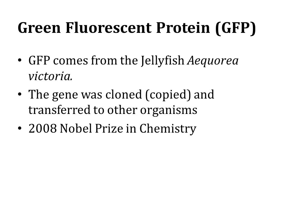 Green Fluorescent Protein (GFP) GFP comes from the Jellyfish Aequorea victoria.