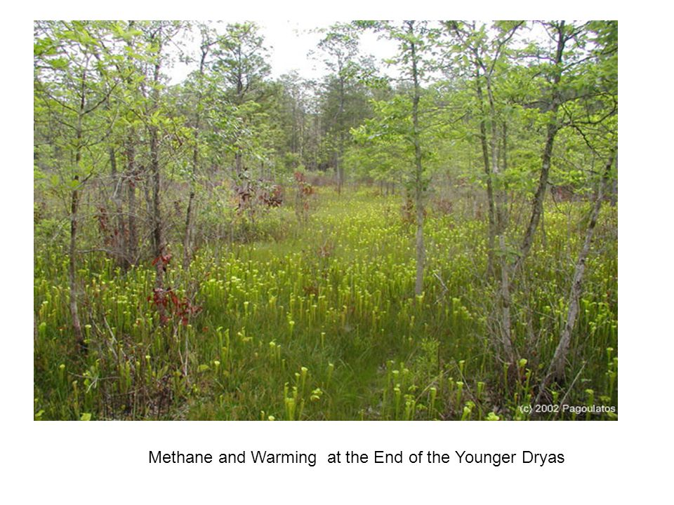 www.aquatic.uoguelph.ca/wetlands/page1.htm Methane and Warming at the End of the Younger Dryas