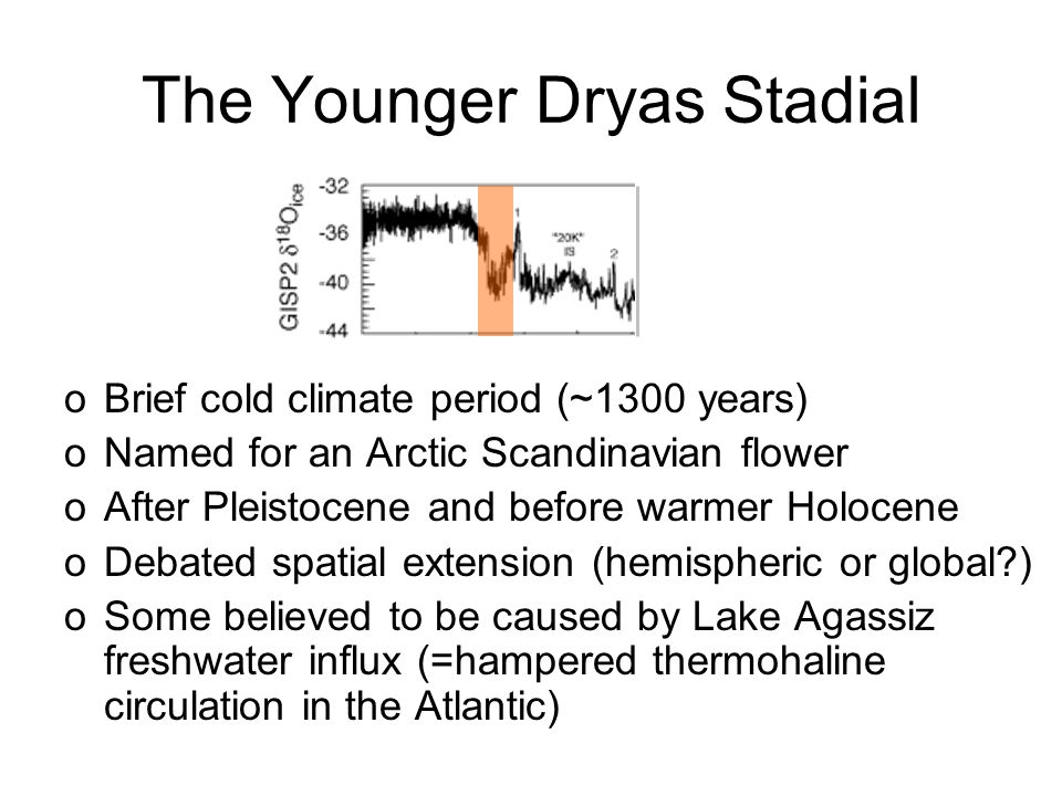 The Younger Dryas Stadial oBrief cold climate period (~1300 years) oNamed for an Arctic Scandinavian flower oAfter Pleistocene and before warmer Holocene oDebated spatial extension (hemispheric or global ) oSome believed to be caused by Lake Agassiz freshwater influx (=hampered thermohaline circulation in the Atlantic)