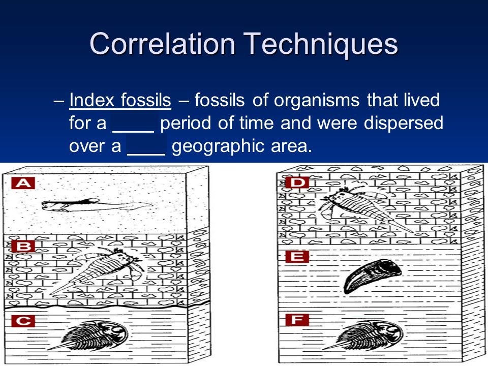 –Index fossils – fossils of organisms that lived for a short period of time and were dispersed over a wide geographic area.