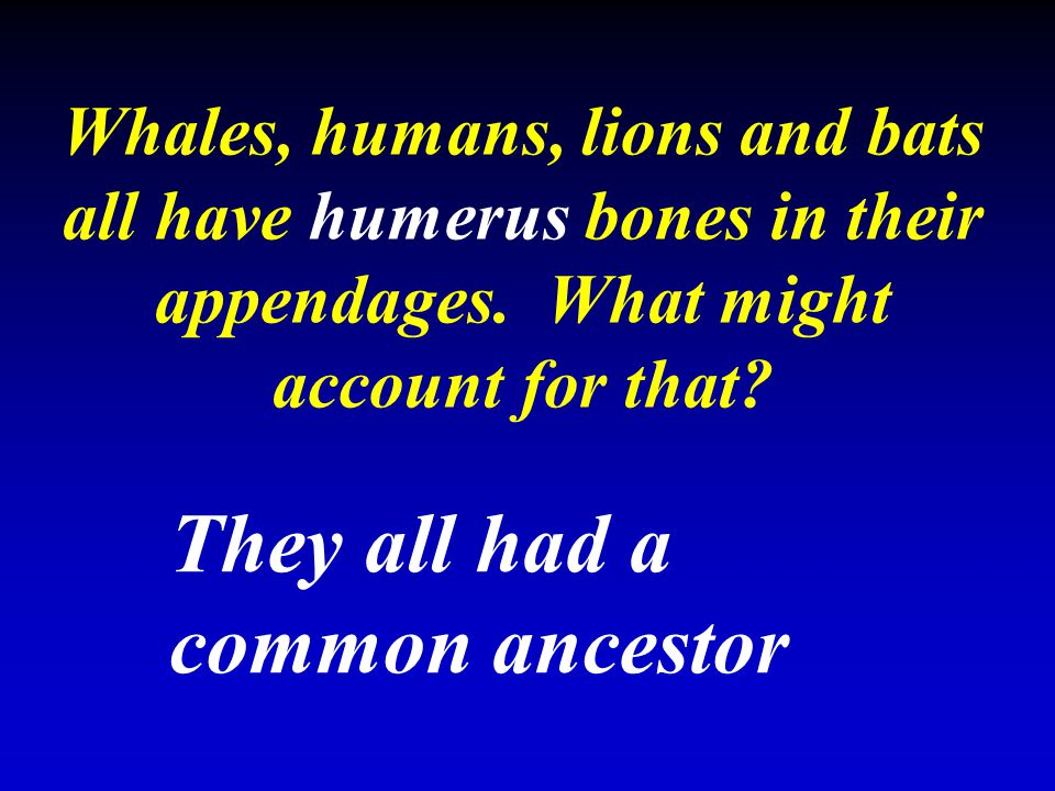 Whales, humans, lions and bats all have humerus bones in their appendages. What might account for that? They all had a common ancestor