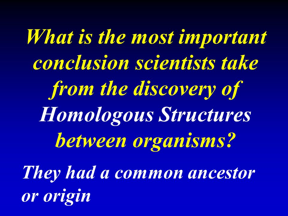 What is the most important conclusion scientists take from the discovery of Homologous Structures between organisms? They had a common ancestor or ori