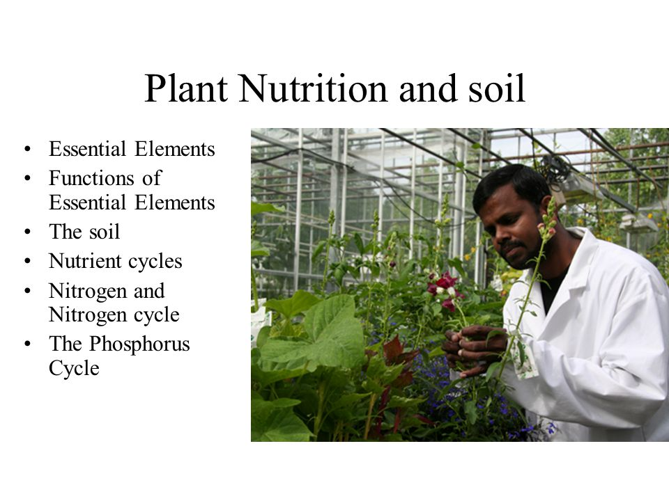 Plant Nutrition and soil Essential Elements Functions of Essential Elements The soil Nutrient cycles Nitrogen and Nitrogen cycle The Phosphorus Cycle