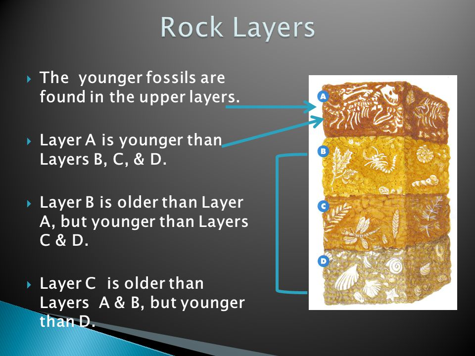  The younger fossils are found in the upper layers.