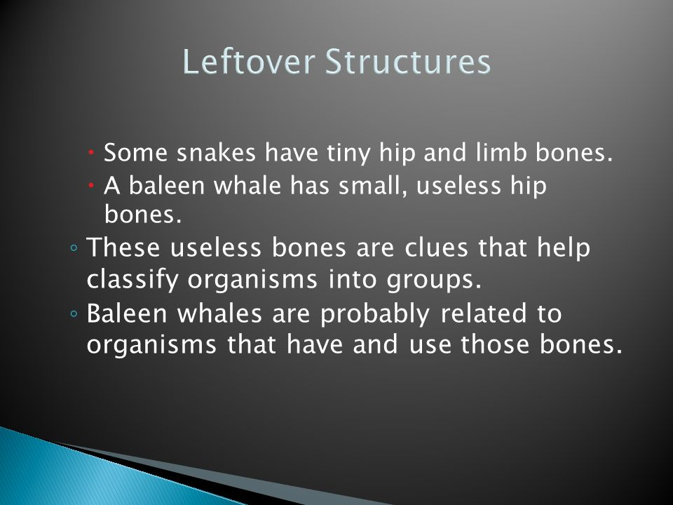 Leftover Structures  Some snakes have tiny hip and limb bones.