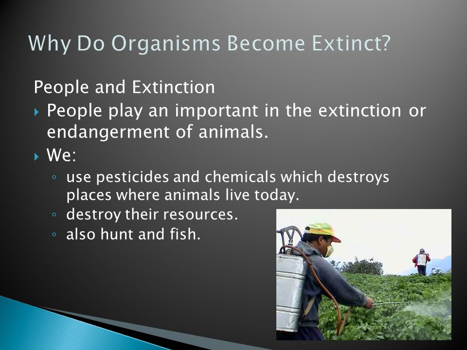 Why Do Organisms Become Extinct? People and Extinction  People play an important in the extinction or endangerment of animals.  We: ◦ use pesticides