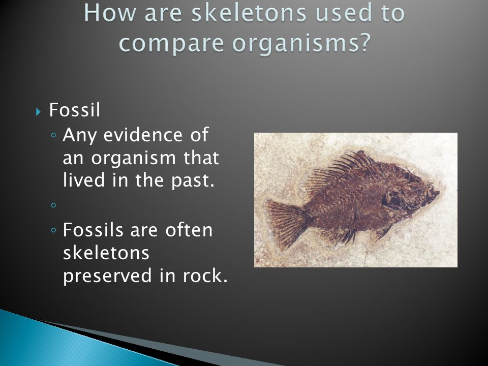  Fossil ◦ Any evidence of an organism that lived in the past.