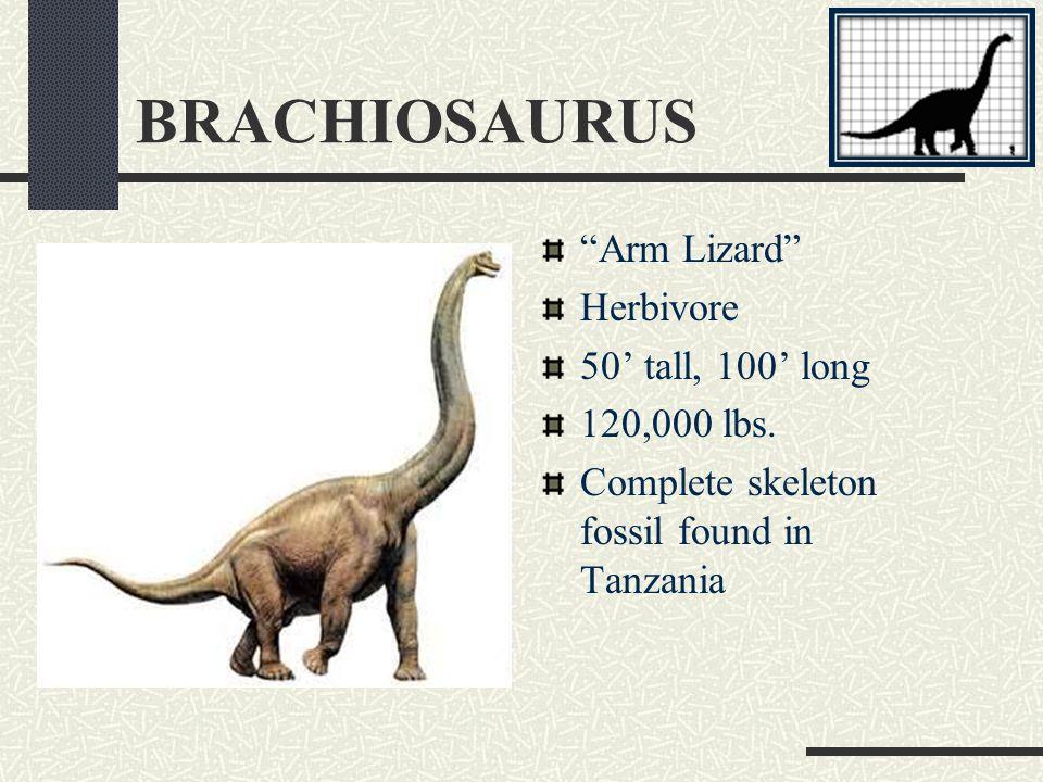 ANKYLOSAURUS Fused Lizard Herbivore 11' tall, 35 long 10,000 lbs.