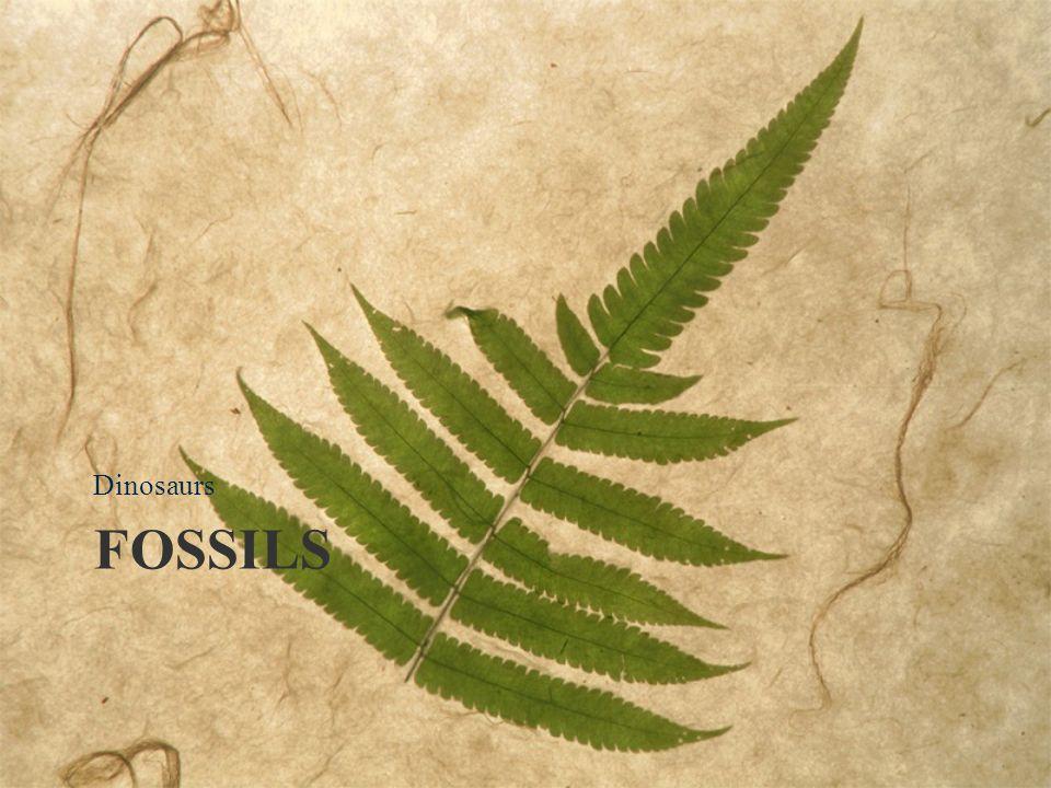 FOSSILS Dinosaurs
