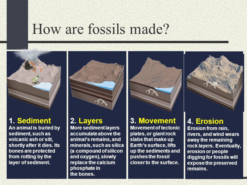 How are fossils made.1.