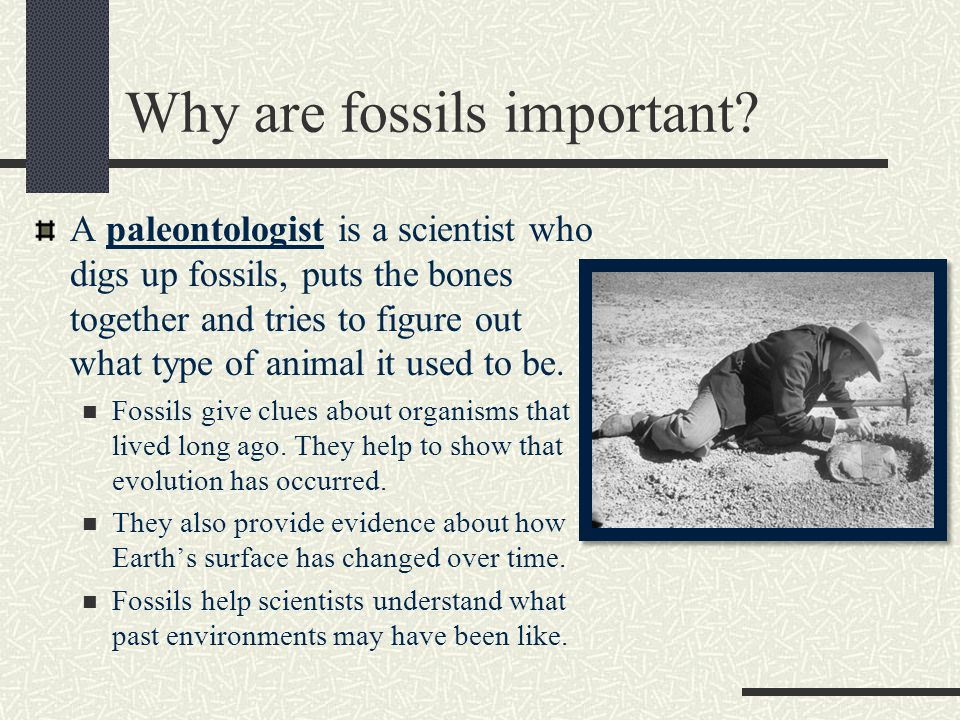 Why are fossils important.