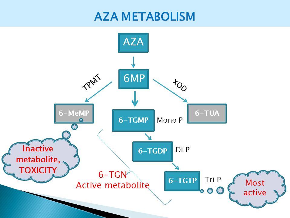 AZA METABOLISM AZA 6MP 6-MeMP 6-TGMP 6-TGDP 6-TGTP 6-TGN Active metabolite TPMT Inactive metabolite, TOXICITY Most active Mono P Di P Tri P 6-TUA XOD