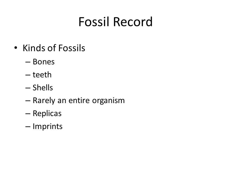 Fossil Record Kinds of Fossils – Bones – teeth – Shells – Rarely an entire organism – Replicas – Imprints
