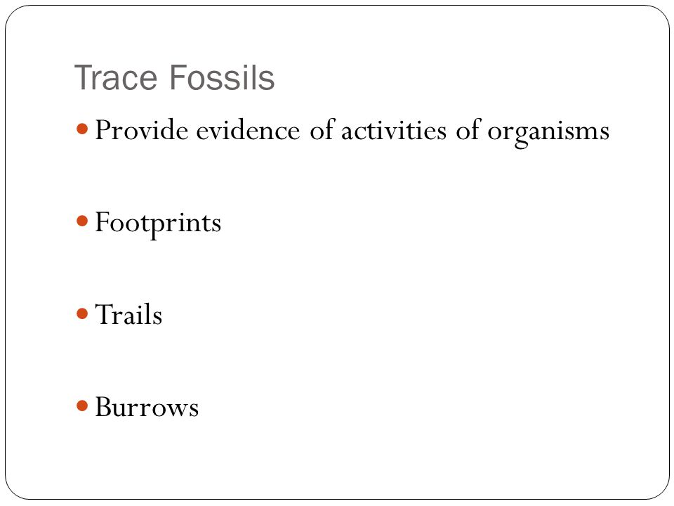 Trace Fossils Provide evidence of activities of organisms Footprints Trails Burrows